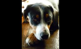 Kastrace psů - Opava