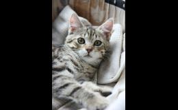 Kastrace koček - Opava