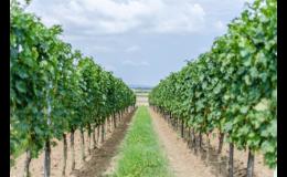 Vinařství Čech s.r.o., Tvrdonice patří do Slovácké vinařské podoblasti