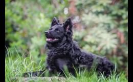 Master of Animal Training – MAT