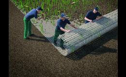 hybridní trávník