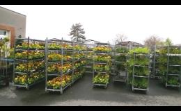 rostliny na zahradu, sazenice, Opava