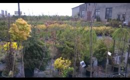GARDEN CENTRUM RAIDA - vše pro vaši zahradu