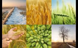 VP AGRO - polní plodiny, osiva, služby i semináře