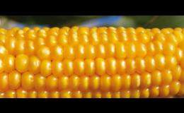 Kvalitní osiva i polní plodiny