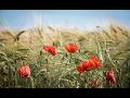 AGRO KMÍNEK, spol. s r.o., rostlinná výroba