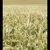 Prodej semen a osiv i ��inn�ch chemick�ch p��pravk� v�eho druhu