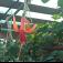 Zahradnictví Petro Mělník: Pokojové, balkonové i zahradní rostliny