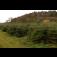 Radhošťtrans, s.r.o. - plantáž vánočních stromků a jejich prodej