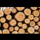 Ladislav Bureš - těžba a přibližování dřeva