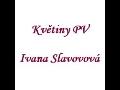 Prodej a aranžování květin Prostějov Ivana Slavovová