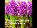 RAIDA - GARDENCENTRUM s.r.o. Zahradnictvi Opava